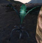 Oblivion: Nirnroot close up
